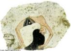 A imagem da acrobata é uma figura bastante conhecida no Egito Antigo, e mostra a dançarina usando apenas uma faixa na cintura fazendo uma performance bastante complicada. A dança era versátil e, além dos movimentos costumeiros, também incorporava acrobacias complicadas. Essas danças acrobáticas eram realizadas com menor frequência e mostrava as habilidades de uma dançarina.  <br/><br/> Palavras-chave: Dança. Dança acrobática. Dançarina egípcia. Egito Antigo.