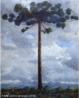 Quadro representando um pinheiro, pintado por Lange de Morretes, de 1954. <br/> Palavras-chave: Lange de Morretes, pintura paranaense